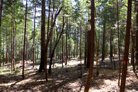 2013_07_RL_forest_management